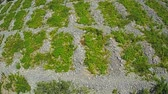 preserved : Aerial view of old traditional Primosten Vineyards preserved as UNESCO World Heritage site. Stock Footage