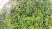 Латинской Америки : Aerial view to the tropical forest in Puerto Plata, Dominican Republic. Стоковые видеозаписи