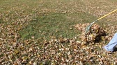 осень : raking fall leaves into a leaf pile