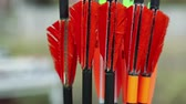 bowman : Arrows for archery. Red arrows in quiver - case for arrows
