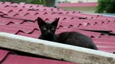 cattish : Black kitten lying on the roof Stock Footage