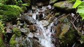 flora : Beautiful tiny brook with cold water Stock Footage