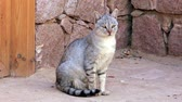 cattish : Egyptian cat