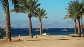 trees : Tropical resort in Tala Bay, Hashemite Kingdom of Jordan. Red sea, gulf of Aqaba. View on Israel and Egypt. Palms on the picturesque beach