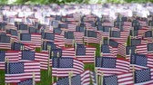 temmuz : American flags at Memorial day in the park