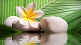 Seamless loop - Plumeria and white stone zen, water reflections, HD video