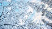 Seamless loop - Snowy branches and trees looking at snowy, winter background, snow falling, HD video