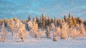 Seamless loop - Snow falling on a snowy winter forest landscape, Saariselka, Lapland, Finland, HD video Stock Footage
