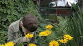 stink : A little boy in the garden is a sniffing yellow flowers. Allergy, medicine concept. 4K slow motion.