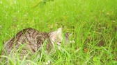 cat strofe : A cat eats in a park on the grass