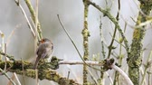 lambreta : an European Robin is looking for dangerous on an tree
