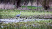 высокий : This heron is waiting for an snack in the meadow