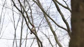 the game : in the forest there is a mandarin duck on a branch