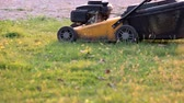 price cut : Lawn mower in motion. Green grass under sunlight. Buy gardening equipment. Stock Footage
