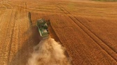 arazi sahibi : Combine harvester in action. Basics of agribusiness. Stok Video