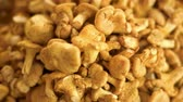 cantharellus : Pile of chanterelles close-up. Little yellow mushrooms. Stock Footage