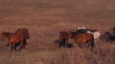 elegáns : Horses grazing on a farm Stock mozgókép