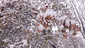 duch : Leaves in the snow. Branches covered with snow. Snowy forest. Winter park. Wideo