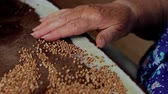 grano saraceno : Old hand sort buckwheat. Old woman preparing a meal. Filmati Stock