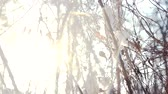 vine branch : Snow falling from tree branches. Winter, bright sun. Stock Footage