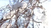 thin ice : Snow and tree branches. Snowflakes falling, sunlight.