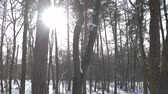 quiet : Pine forest in winter. Trees and bright sun. Stock Footage