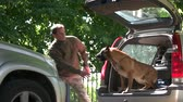 belga : Dog in a car trunk is barking on a stranger. Dog is training to protect a property. Vídeos