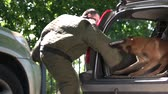 obediência : Dog in a car trunk is furiously biting a violator. Property protection exercise.