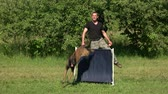 komuta : Dog jumping exercise. Man is teaching his dog to jump over the agility bar jump.