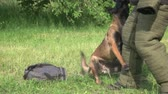 esfarrapado : Guard dog is attacking a violator. Dog is guarding a bag and suddenly attacking a violator.
