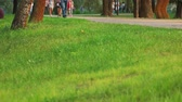 outing : Green grass on crowded park. People walking and strolling in a park.