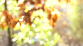 inserir : Beautiful nature, blurred background. Bokeh out of focus background from nature forest.