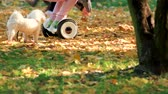 electric scooters : Little girl with gyroscooter and dog. Many oak leaves on the grass. Stock Footage