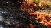 burnout : Ash of burnt grass in the fire. Fire flame motion close up. Stock Footage