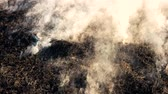 загрязнение : Black smoldering dry grass with smoke in wood. Burning fields wildfire close up. Danger of forest burn in the heat. Стоковые видеозаписи