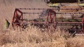 combine harvester : Combine harvesting dry grass. Close up. Combine is riding, harvesting and cutting.