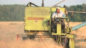 vykládání : Man driving combine. Front view. Golden field with wheat.