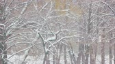 zúzmara : Snow fall in winter forest. Snowy winter scene. Winter has come.