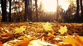 Autumn landscape in the city park. Beautiful sunset in autumn forest. Enjoy the autumn season. Vídeos