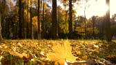 Yellow autumn leaves in sunlight. Carpet of autumnal leaves close up. Sun rays in autumn forest.