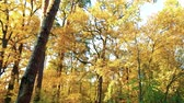 Yellow autumn trees at forest. Amazing view on trees in autumn park with warm sunlight.