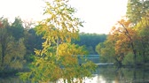 Beautiful autumn landscape. Lake surrounded by trees with colored autumn leaves. Panorama of beautiful autumn landscape. Amazing scenery of fall. Vídeos
