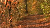 Orange autumn and fall forest pathway. Fall season in wood land. Best autumn view.
