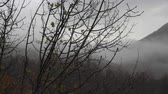 brzoza : Autumn, the branch of a tree with drops of rain and yellow leaves. The clouds on the tops of the mountain. Wideo