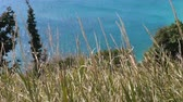 emerald water : turquoise sea through the grass. grass swaying in wind. Stock Footage