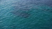 Disturbed blue ocean water surface. Nice looping background Stock Footage