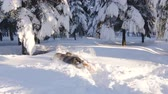 Happy couple playing snowball fight and having fun in snow in winter forest Stock Footage