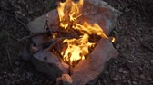Evening in the forest, lit a bonfire. The fire burns brushwood, branches, logs.