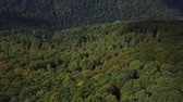conífero : Nature top-down aerial view, flying over lush pine tree forest.