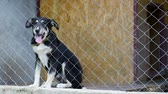 zamčený : Dog in his cage at animal shelter waiting to be adopted. Lonely puppy in aviary.